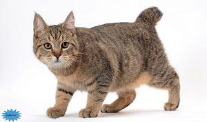 عکس گربه پیکسی باب