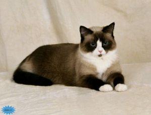 عکس گربه کفشبرفی
