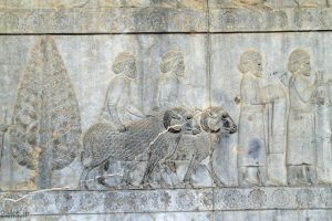 هدایا برای شاه هخامنشیان