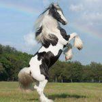 اسب ابلغ