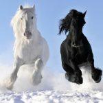اسب با کیفیت بالا