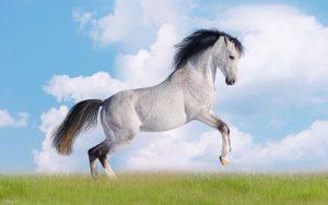 اسب HD