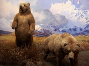 انیمیشن خرس