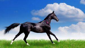 تصاویر اسب
