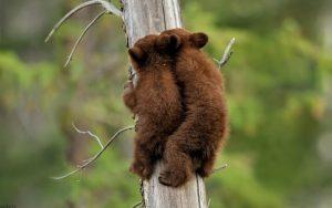 تصاویر بچه خرس