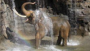 تصویر فیل