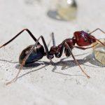 تصویر مورچه