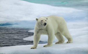 خرس HD