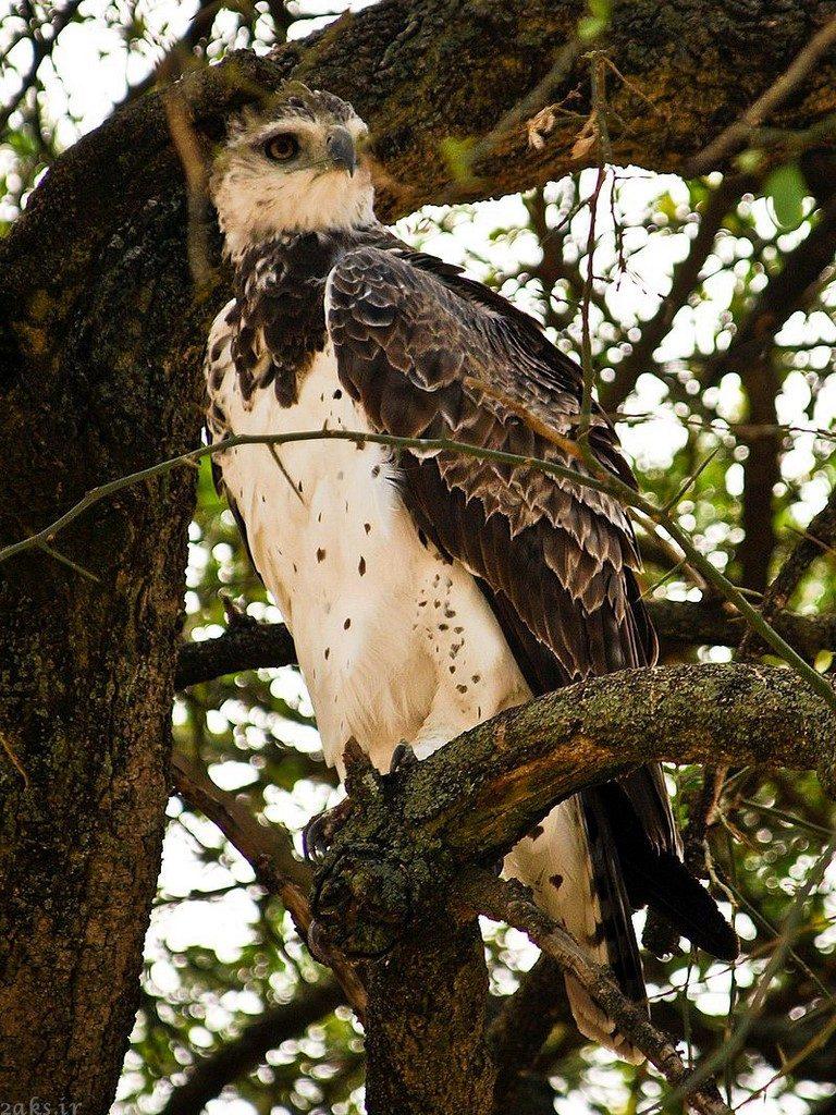عقاب جنگی