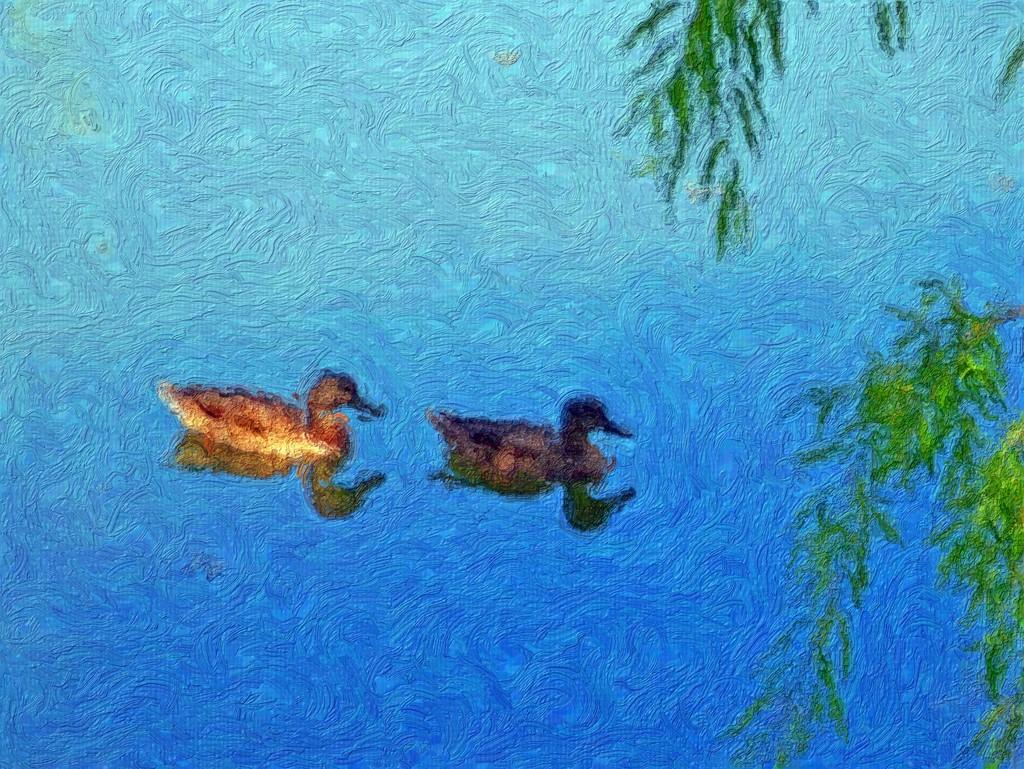 عکسهای اردک