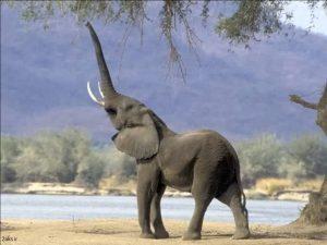 عکس فیلها