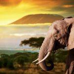 عکس فیل ها
