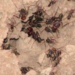 عکس مورچه ها