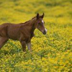 عکس کره اسب