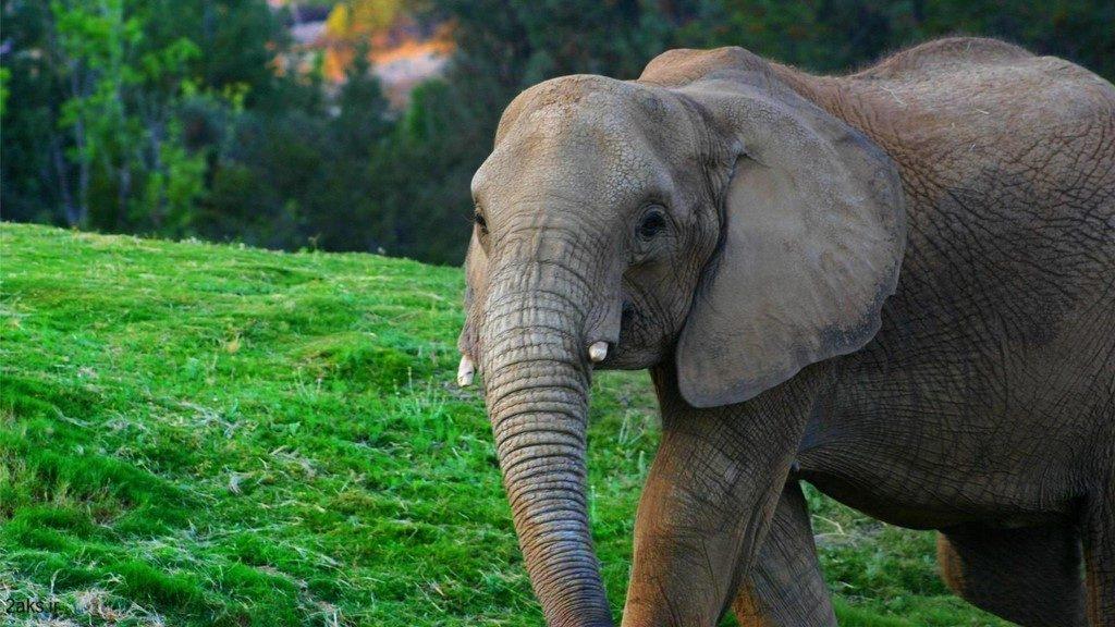 فیل اچ دی