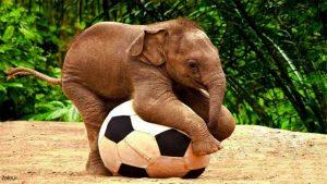 فیل با کیفیت بالا