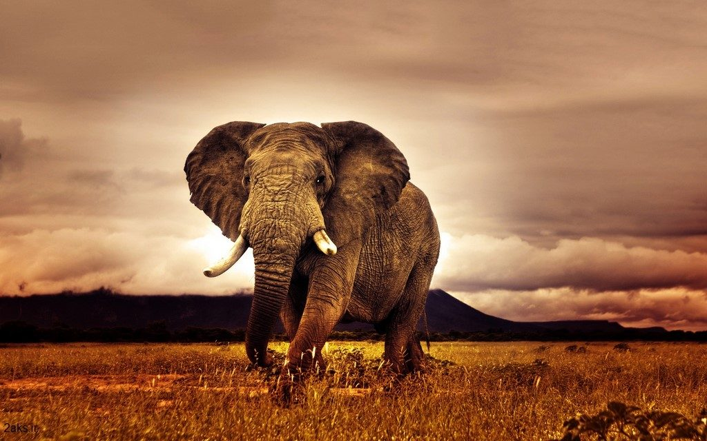 فیل HD
