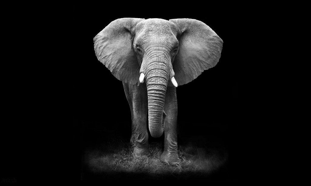 والپیپر فیل
