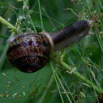 تصاویر حلزونها