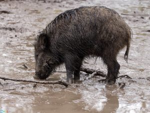 عکس بچه گراز