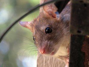 عکس موشها