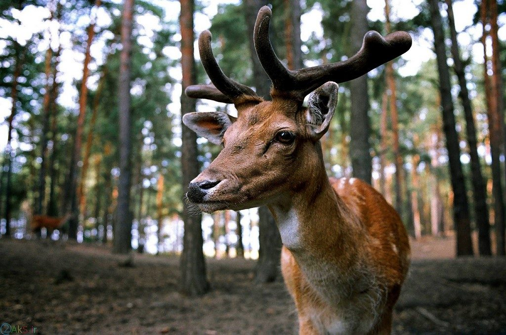 Photo Deer