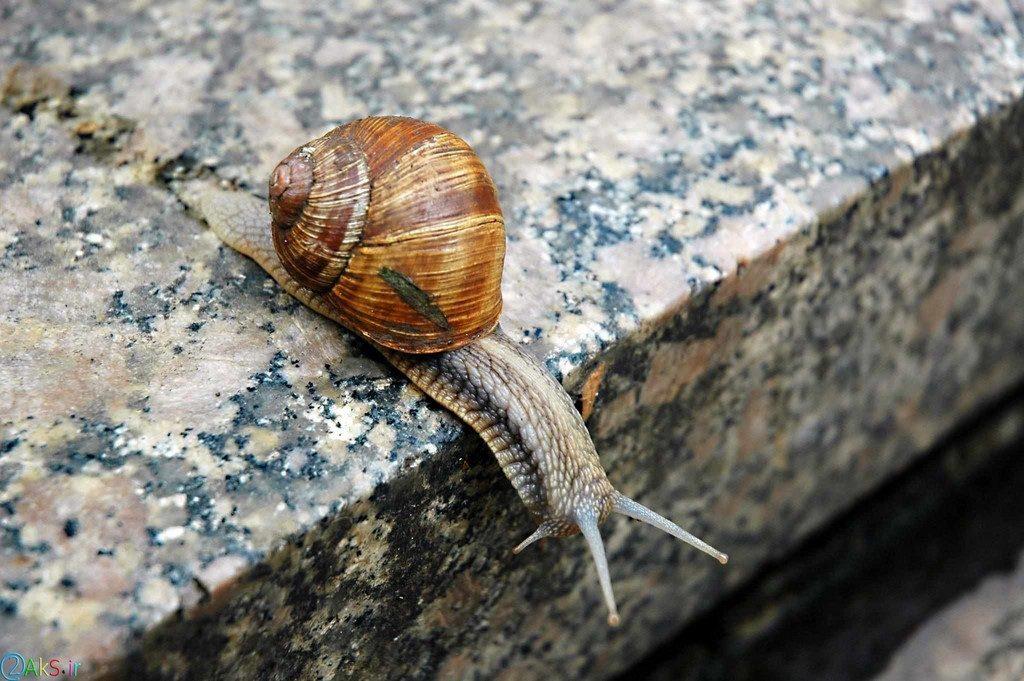 Photo Snail