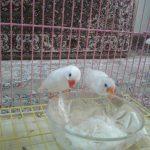 Photos Finch