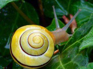 Photos Snail