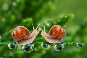 picture Snail