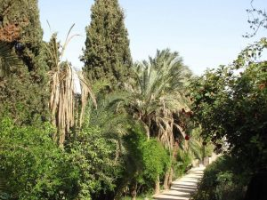 تصاویر باغ گلشن