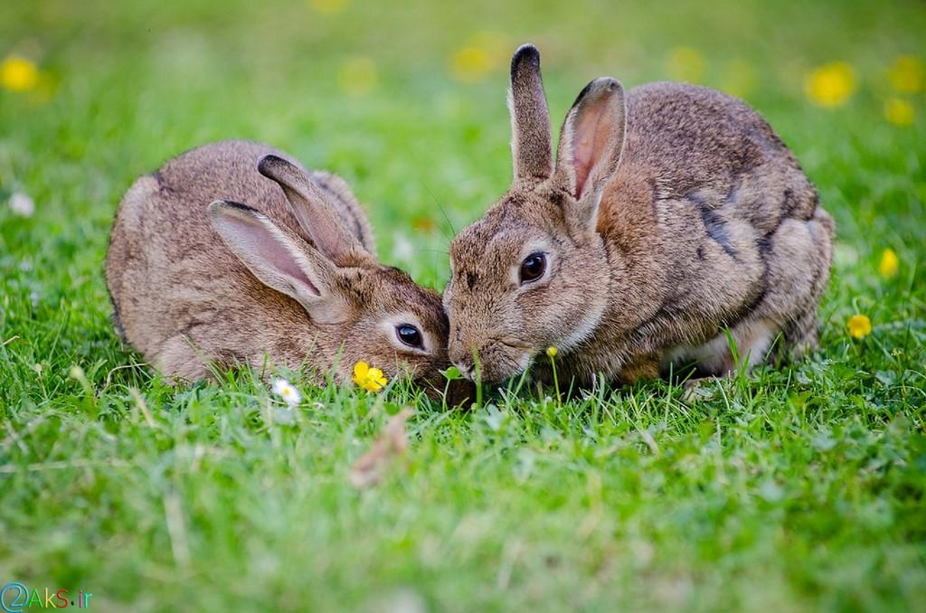 تصاویر خرگوش