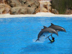 تصاویر دلفین