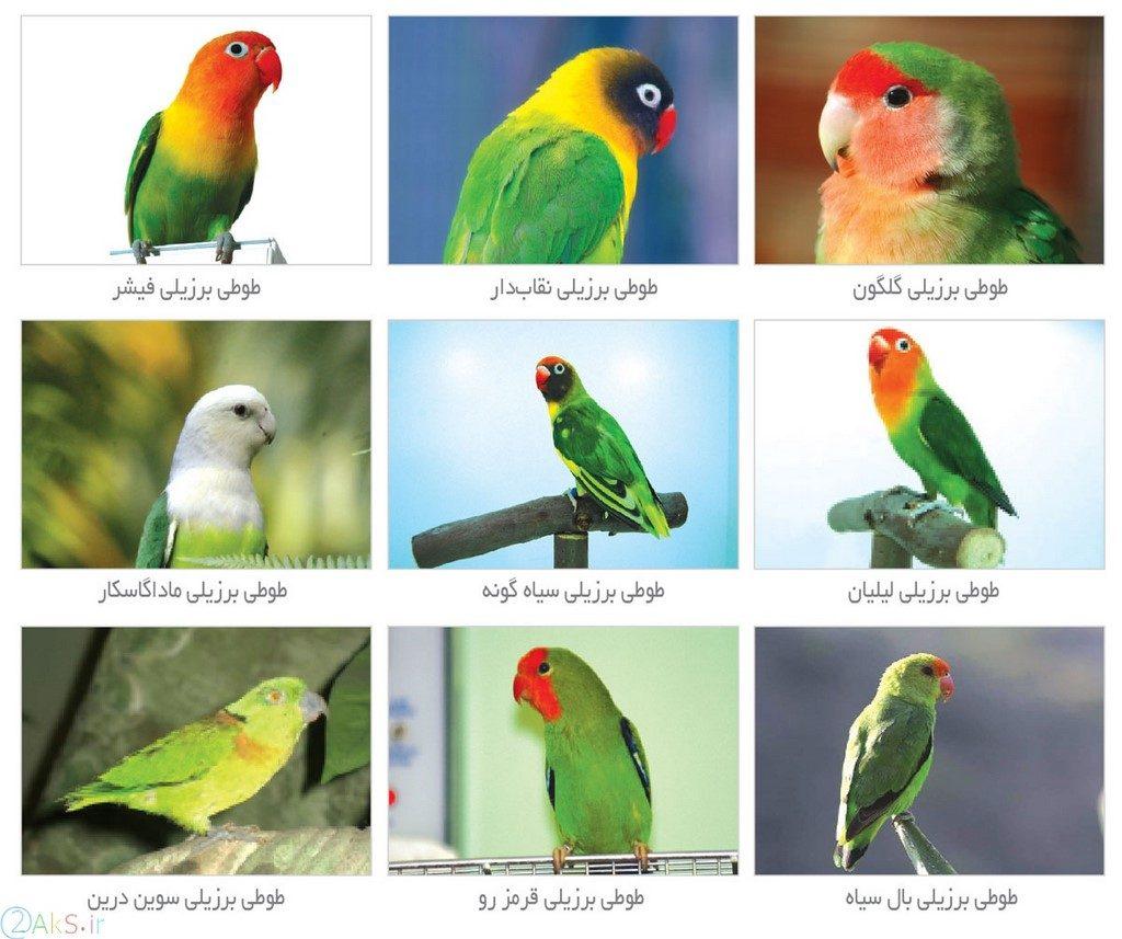 تصاویر طوطی