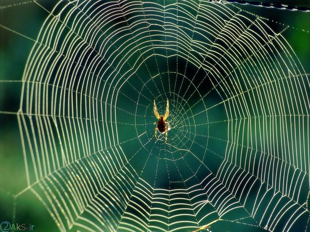 تصاویر عنکبوت