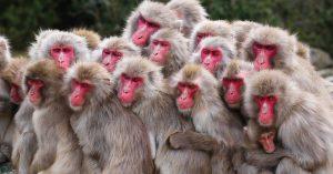 تصاویر میمون
