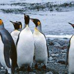 تصاویر پنگوئن