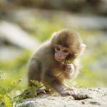 تصویر بچه میمون