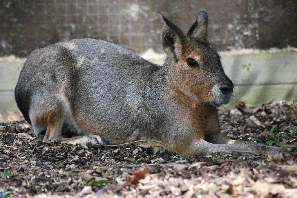 تصویر خرگوش
