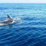 تصویر دلفین