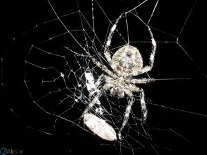 تصویر زمینه عنکبوت