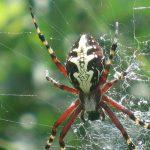 تصویر عنکبوت
