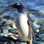 تصویر پنگوئن