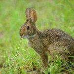 خرگوش اچ دی