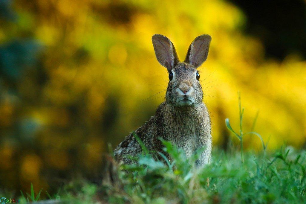 خرگوش ها