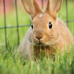 خرگوش HD