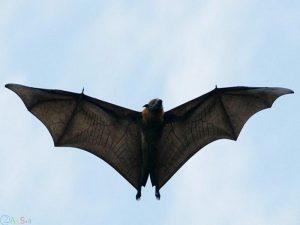 خفاش ها