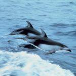 دلفین با کیفیت بالا