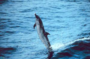 دلفین HD
