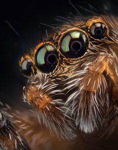 عنکبوتهای جهنده